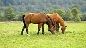 paard gezond