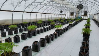 grow bag in serre march-farm-ready-to-plant