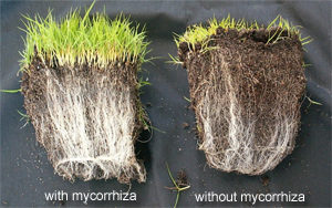 Mycorrhiza BioSolutions